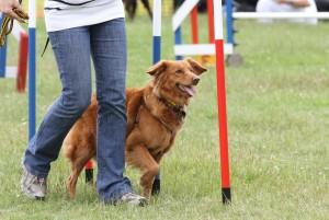 dog agility bcs2013 640