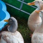 blackwater country show 2012 627